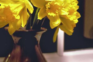 Daffodil Bouquet in Vase at Window