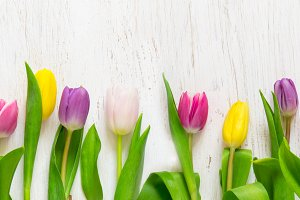 Beautiful tulips on a white background. Spring Concept. Long.