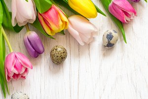 colorful tulips and quail eggs on a white background. Easter