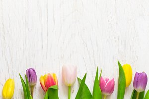 Spring Concept. Beautiful tulips