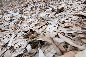 Background Texture Of Fallen Leaves In A Forest