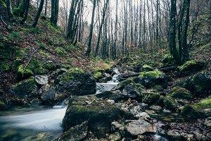 Stream in the Autumn / Dark Forest