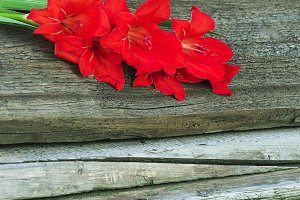 Red gladiolus on wooden boards