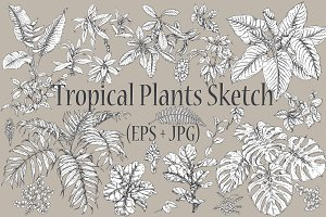 Tropical Plants Sketch