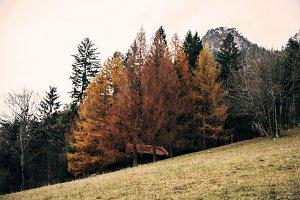 Beautiful Autumn Landscape & Forest