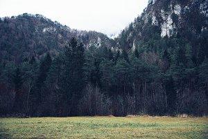 Dark Forest / Woods
