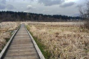 Walkway through wetlands