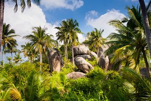 Palm trees in tropical forest