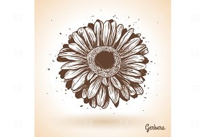 Hand drawn gerbera flower