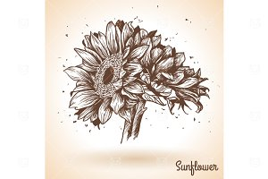 Hand Drawn Sunflower