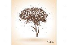 Hand drawn Dahlia flower
