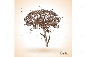 Hand drawn Dahlia flower