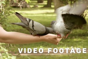 Pigeons eating on the hands
