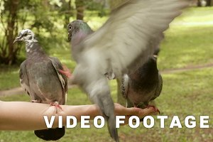 Pigeons fighting for the food