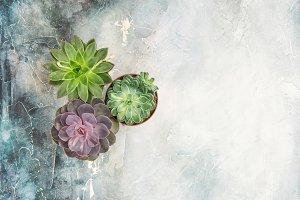 Floral flat lay Succulent plants