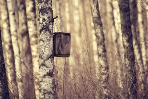 Nesting box in the forest