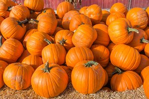 Pumpkins for fall festival