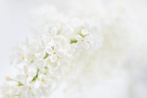 Spring background with lilac flowers