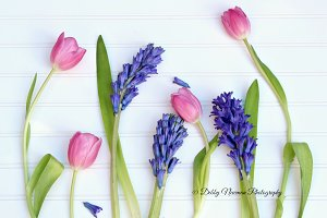 Tulips and Hyacinths Spring flowers
