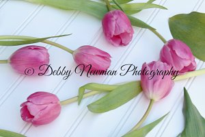 Pink Tulips Scattered