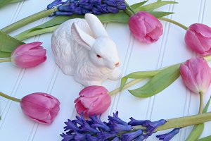 Bunny with Tulips & Hyacinths