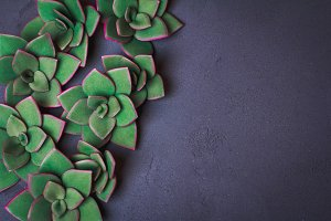 Green succulents mock up