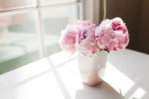 Vase of Pink Peonies by Window Light