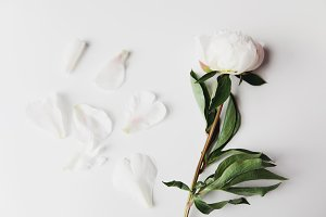 White Peony & Petals