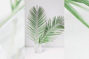 Modern & Fresh Palm Leaves