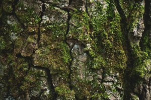 Textured colorful old tree bark with green moss texture, forest woods nature background photography