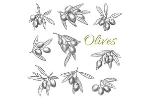 Olives branches vector sketch icons set