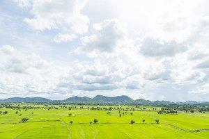 Wide rice fields