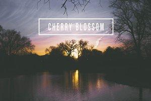 LR Preset- Cherry Blossom Sunset