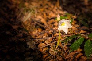 White spring flowers