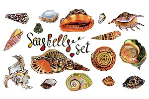 Seashells set and patterns