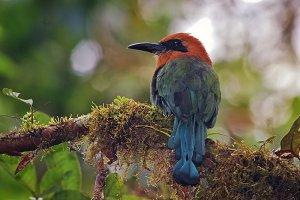 Exotic Bird of Ecuador