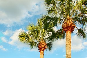Two Palms Against the Clouds