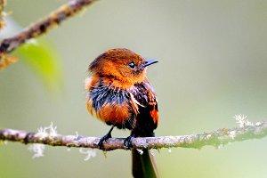 Tiny Exotic Brown Bird