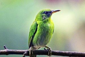 Closeup Exotic Bird