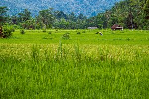 Rice tarrace with working farmer in Sidemen. Bali, Indonesia