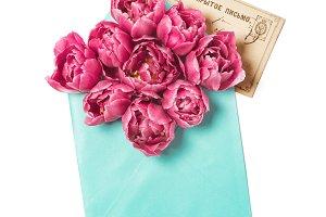 Pink tulip flowers vintage postcard