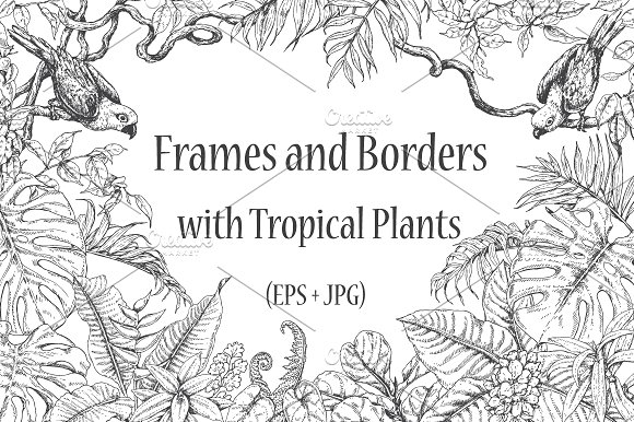 Tropical Frames And Borders