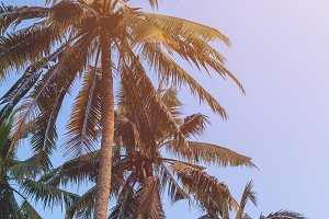 Coconut tree abd blue sky