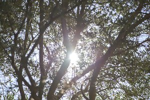 Branches of tree under the sun