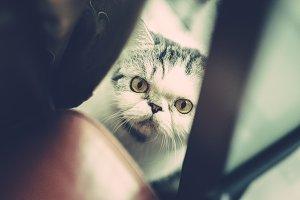 Cat, hiding