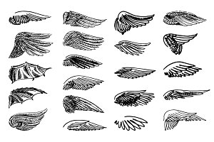 Wings illustration set