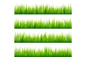 Grass isolated on white set. Green meadow. Nature background. Spring, summer time.