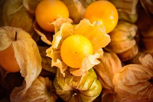 cape gooseberry, fruit ground cherry
