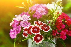 wild carnation different color bouquet