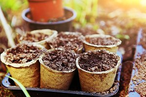 pots with soil for garden sprouts on the spring outdoor country